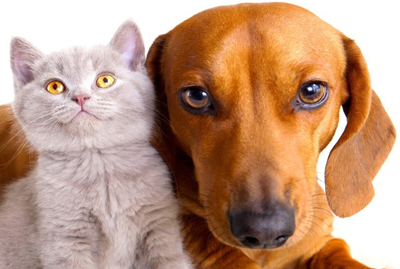 Pet Insurance, ASPCA Pet Health Insurance Plans | Star ...